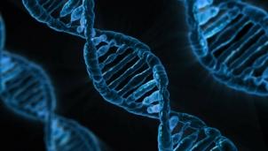 """Kat7 - Liệu pháp gene giúp con người """"cải lão hoàn đồng"""""""