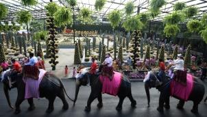 Đám cưới trên lưng voi vào ngày Lễ tình nhân của 52 cặp đôi Thái Lan