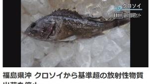 Fukushima nâng mức cảnh báo khi bắt được cá nhiễm phóng xạ
